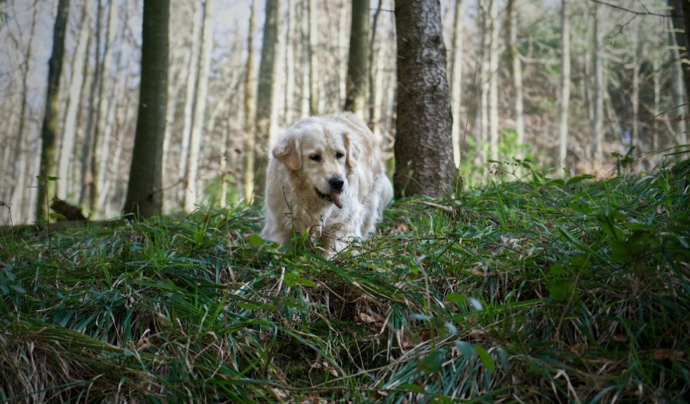 Beware of dangers to your pets in Autumn