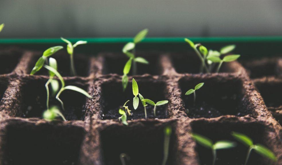 Lockdown saw an increase in seed sales