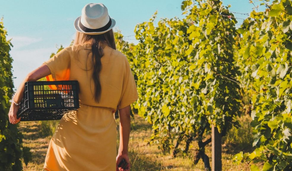 Top vineyards to visit in the UK