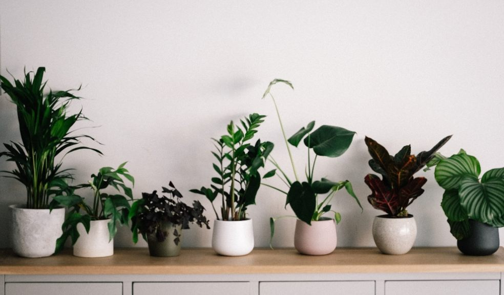 Research by NASA has found that indoor plants can remove 87% of air toxins in just 24 hours