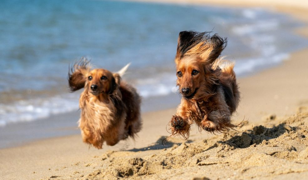 Dog- friendly beaches in the UK revealed after analysing Google ratings and reviews for 151 beaches