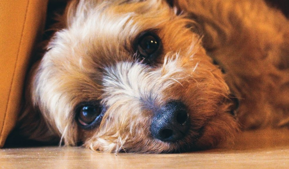 Manage your pets anxiety as we head out of lockdown