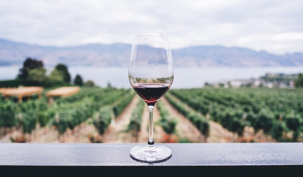 Glass of red wine with view of vineyard