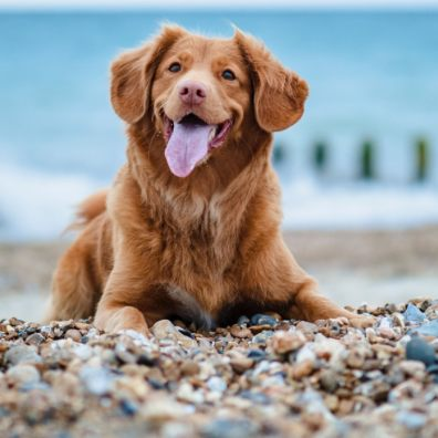 In its debut year Canine Critics received just over 7,000 applications