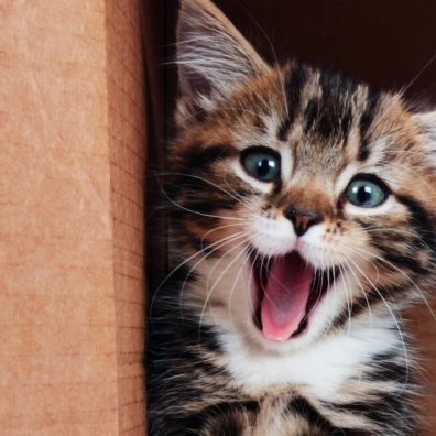 How much do you really know about cats? (iStock/PA)
