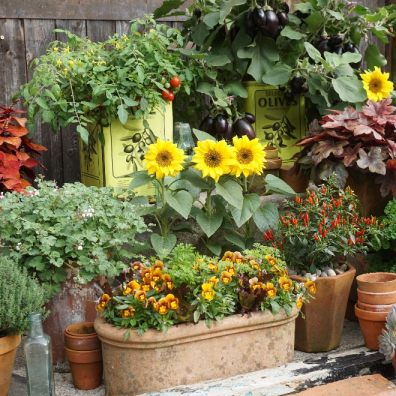Flowers and veg in pots