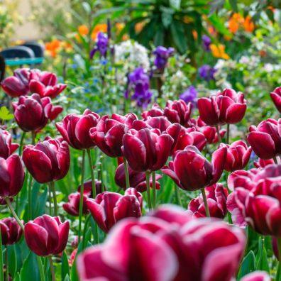 Garden flowers blooming