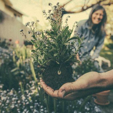 Winter gardening is becoming more popular