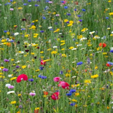 Hay fever sufferers should consider what medication they have taken before getting behind the wheel