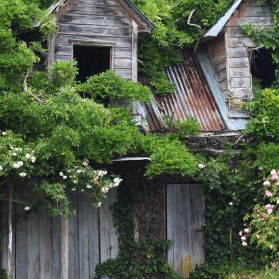 nature, garden, gardens, family