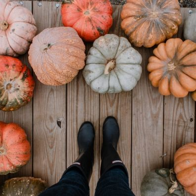 12.6 million pumpkin carcasses will be heading for landfill