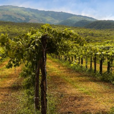 UK's best vineyards have been revealed for a summer full of fun!