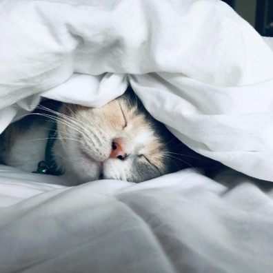 Study reveals the lengths brits go to to keep their beloved pets cosy