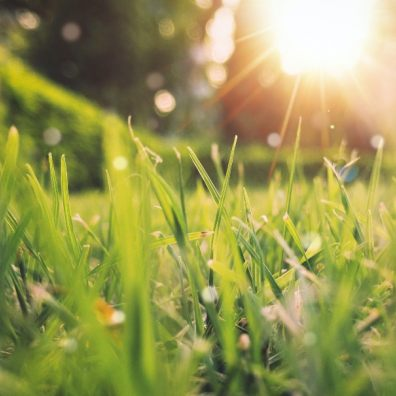 Pollen outside and dust inside will be a growing issue for many